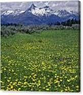 1a9210-pilot Peak And Wildflowers Canvas Print