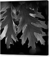 Pin Oak Leaves Canvas Print