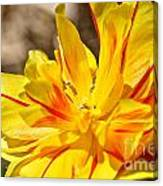 Pin Striped Tulip Canvas Print