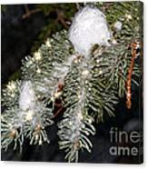 Pine Branch With Ice And Stars Canvas Print