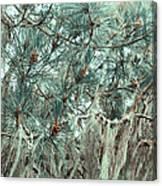 Pine Cones And Lace Lichen Canvas Print