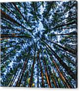 Pine Explosion Canvas Print