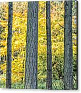 Pine Forest In The Autumn Canvas Print