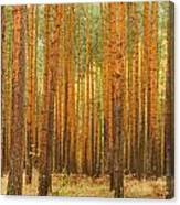 Pine Forest Canvas Print