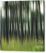 Pine Forest.blurred Canvas Print