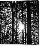 Pine Grove I Canvas Print