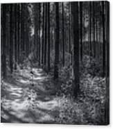 Pine Grove Canvas Print
