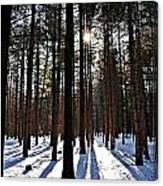 Pine Grove Vii Canvas Print