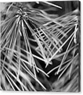 Pine Needle Abstract Canvas Print