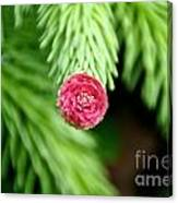 Pine Perfection Canvas Print