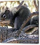 Pine Squirrel Canvas Print