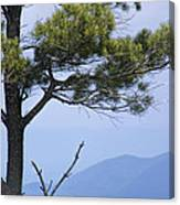 Pine Tree Along The Blue Ridge Parkway Canvas Print