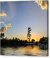 Pine Tree At Sunset Canvas Print