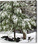 Pine Tree Covered With Snow 2 Canvas Print