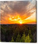 Pine Trees At Sunset Canvas Print