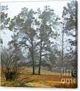 Pine Trees In Mist - Digital Paint 1 Canvas Print