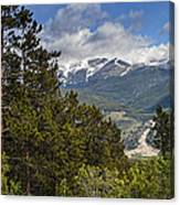 Pine Trees In The Rocky Mountain National Park Canvas Print