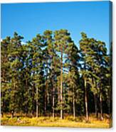 Pine Trees Of Valaam Island Canvas Print