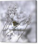 Pine Warbler In The Snow - Better Than Red Canvas Print
