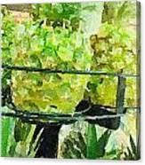Pineapple Green Canvas Print