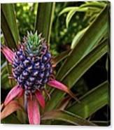 Pineapple Royal Canvas Print