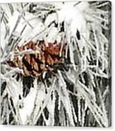 Pinecone In Snow Canvas Print