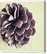 Pinecone Canvas Print