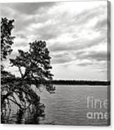 Pinelands Memories Canvas Print