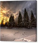 Pinewood River Canvas Print