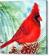 Piney Perch Canvas Print