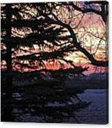 Piney Sunset Canvas Print