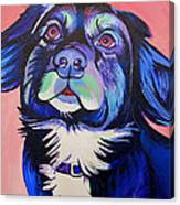 Pink And Blue Dog Canvas Print