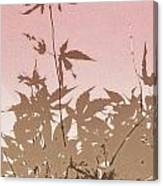 Pink And Brown Haiku Canvas Print