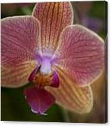 Pink And Orange Orchid Canvas Print