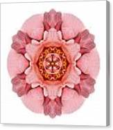 Pink And Orange Rose Iv Flower Mandala White Canvas Print
