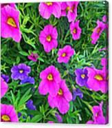 Pink And Purple Petunias Canvas Print