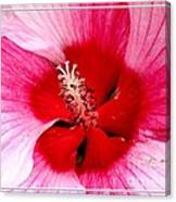 Pink And Red Hibiscus Flower Canvas Print