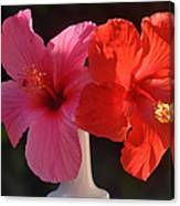 Pink And Red Hibiscus Canvas Print