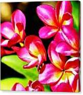 Pink And Red Plumeria Canvas Print