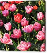 Pink And Red Ruffly Tulips Square Canvas Print