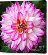 Pink And White Dahlia Square Canvas Print