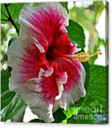 Pink And White Hibiscus Canvas Print
