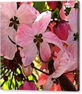 Pink And White Shower Tree Canvas Print