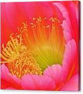 Pink And Yellow Cactus Flower Canvas Print