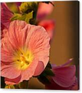 Pink And Yellow Hollyhock Canvas Print
