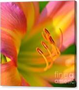 Pink And Yellow Canvas Print