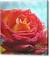 Pink And Yellow Rose With Dew II  Canvas Print