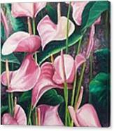 Pink Anthuriums Canvas Print