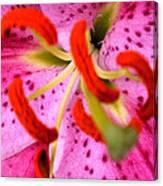 Pink Aroma  Canvas Print