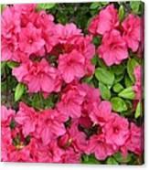 Pink Aura Canvas Print